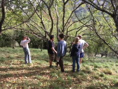 Planning in the apple orchard